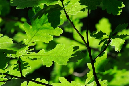 Closeup of green leaves partially lit by sunlight Stock Photo - 1397722