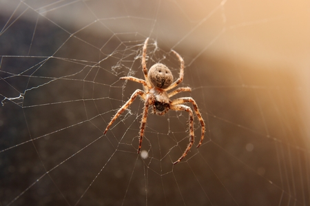 Closeup of a big spider in it's web Stock Photo - 1397067