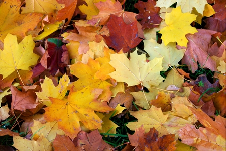 Colorful fallen leaves on the ground forming a background