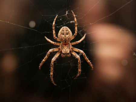 Closeup of a cross spider in its web Stock Photo