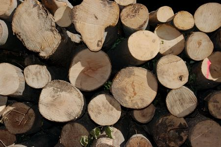 brich: Big pile of tree trunks in the forest