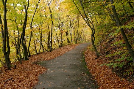 road autumnal: Footpath going through a colorful autumnal fores