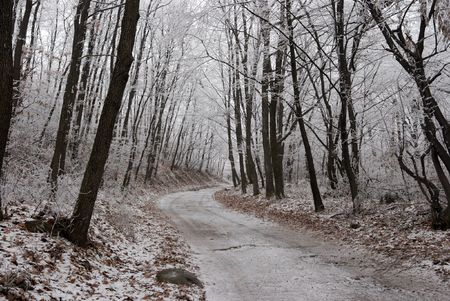Frosty winter forest with a path through it Stock Photo - 2375478