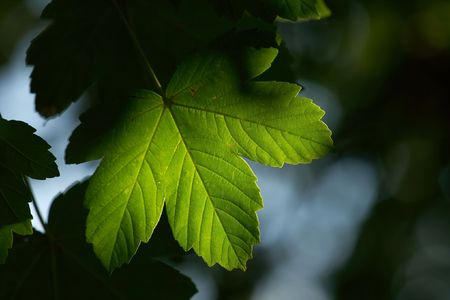 Green leaf illuminated in the shadows Stock Photo - 2404126