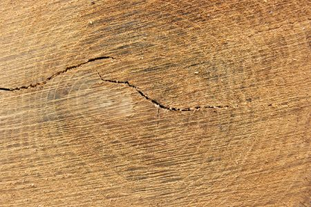 Detailed texture of a cut treetrunk photo