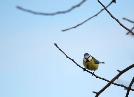 Small bird on a branch of a bare tree photo
