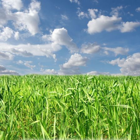 Fresh green agricultural field with cloudy blue sky photo