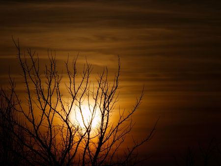 Bare tree silhouette in the sunset Stock Photo - 3091179
