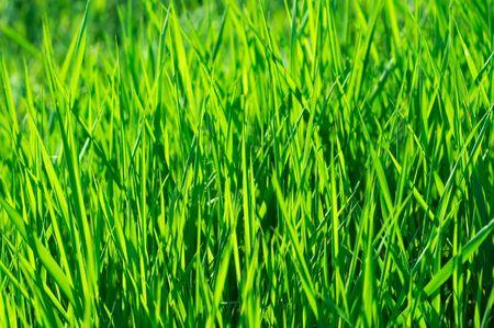 Vibrant green grass background Stock Photo