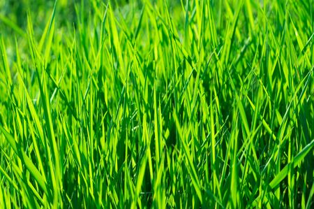 Vibrant green grass background Stock Photo