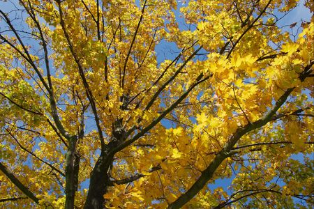 Autumn tree with yellow leaves Stock Photo - 3532962