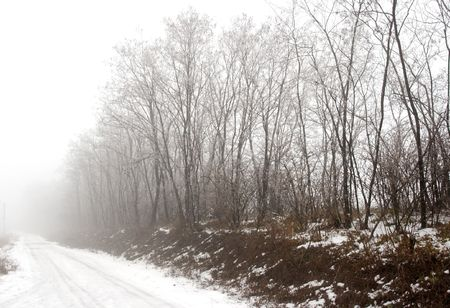 Bare trees fading into the fog on a snowy day photo