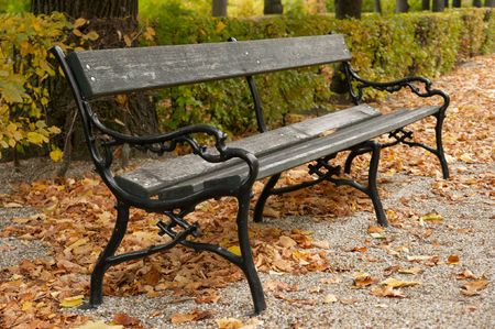 Bench in a park with fallen autumn leaves photo