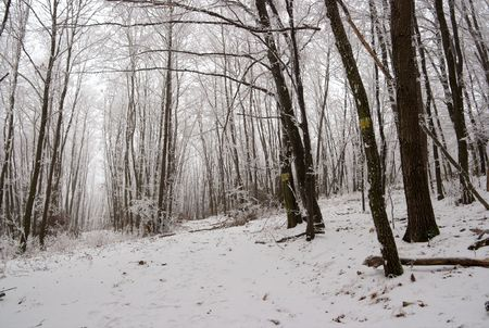 Winter forest with frosty trees Stock Photo - 3555550
