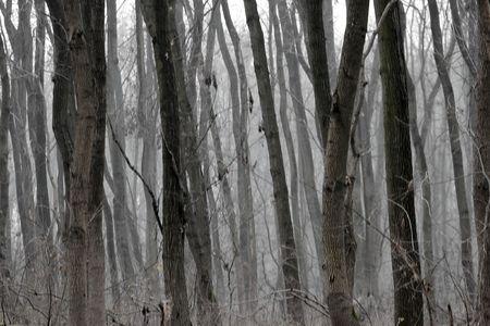 Dark, foggy winter forest
