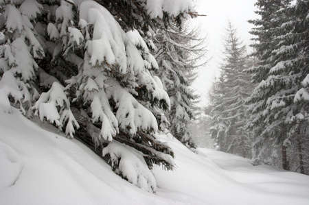 Winter forest path with lots of fresh snow photo