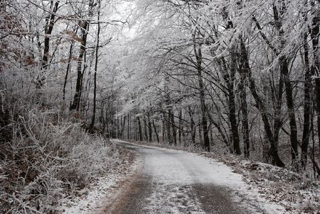 icy: Path through a winter forest with frosty trees