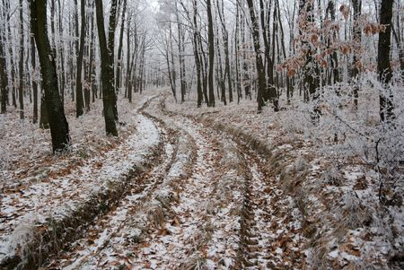 Path going through the frosty winter forest Stock Photo - 3841719