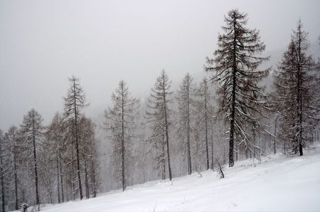 Winter forest with snowy trees Stock Photo - 3877991