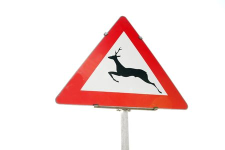 warns: Traffic sign warns about animals by the road