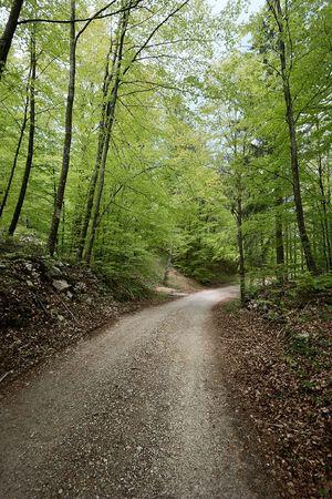 forrest: Pad gaat door een groen bos