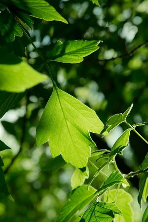 Green leaf in the shadow of a forest Stock Photo - 4401745
