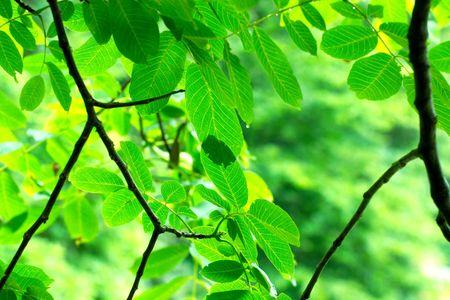 Fresh green leaves background Stock Photo - 4495529