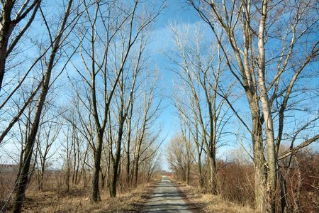 dirtroad: Bare autumn trees next tu a rural road Stock Photo