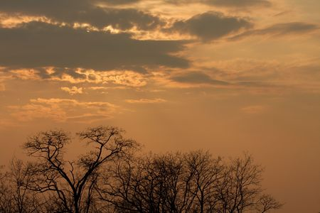 Dramatic cloudy sky and bare treetops photo