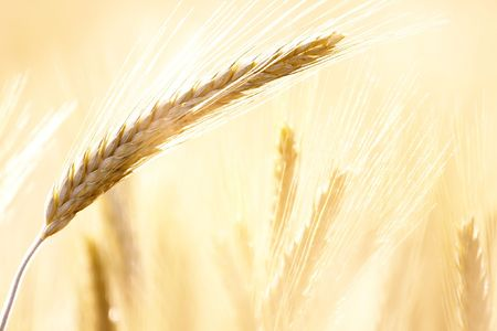 Agricultural field detail in bright light Stock Photo - 6674683