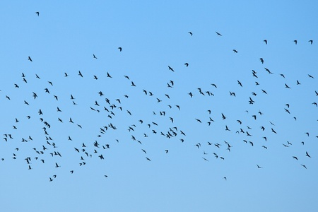 Flock of birds flying in the sky photo