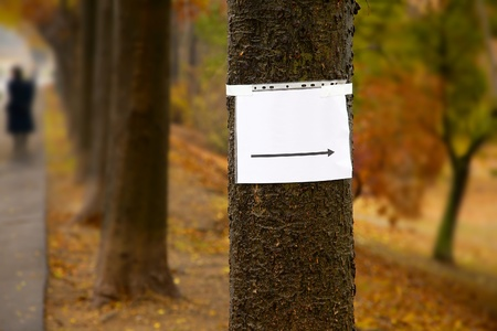 Blank sign on a tree in a park Stock Photo - 22108828