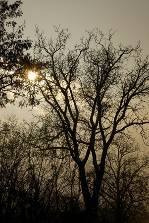 Bare, leafless trees against twilight sky photo