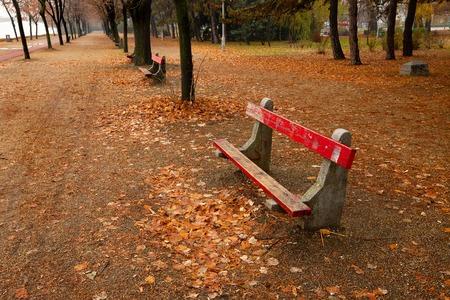 Path going through an autumn forest photo