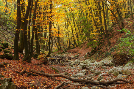 Forest with colorful autumn leaves photo