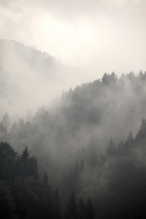spooky: Fog covering the mountain forests