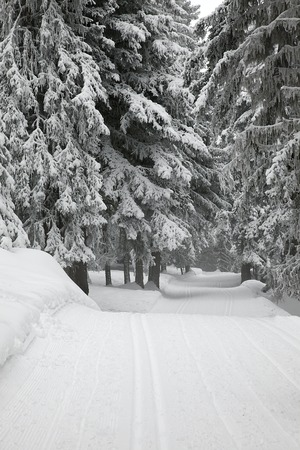 frostbitten: Snowy forest path in winter Stock Photo
