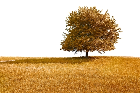 Autumn tree and meadow, white background photo