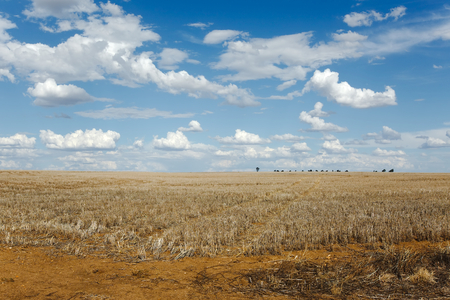Endless field in bright daylight Stock Photo