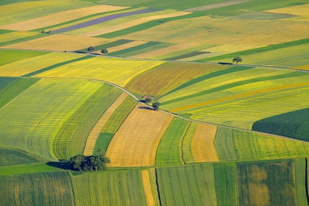 birds eye view: Aerial view of agricultural fields