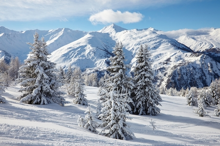 snow covered mountain: Snowy pine trees on a winter landscape