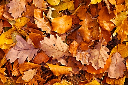 Fallen leaves on the ground photo