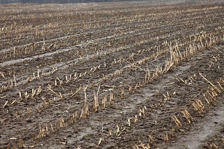 mire: Muddy land of an agricultural field