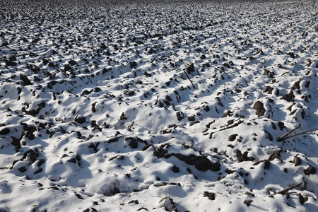 snow field: Agricultural field covered by fresh snow