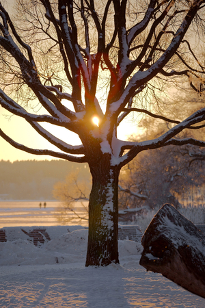 natureal: Winter tree with sunlight peeking through