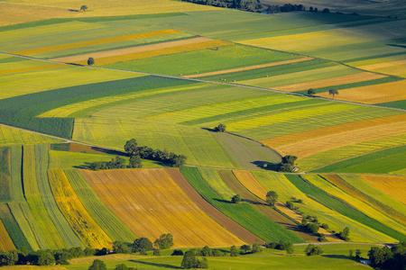 aerial: Vista aérea de campos agrícolas