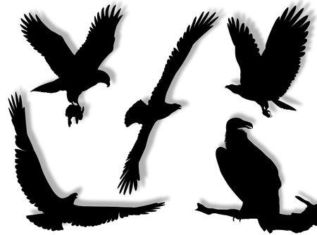 silhouette aquila: Eagle silhouette in diverse pose e atteggiamenti Archivio Fotografico