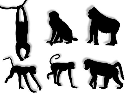 freedom of expression: Monkey silhouettes in different poses and attitudes Stock Photo