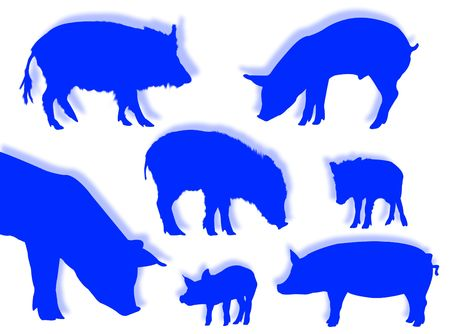 omnivorous: Pig and wild boar silhouettes in different poses