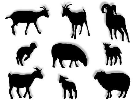 cabras: Ovinos y caprinos en silueta en diferentes poses